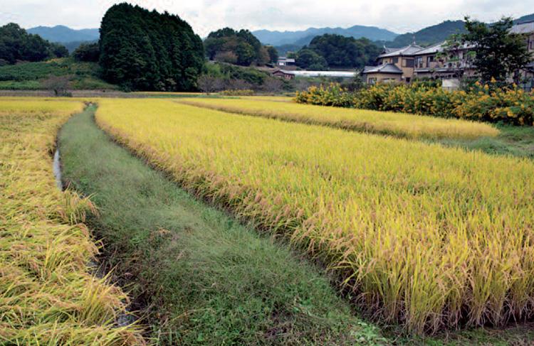 N057 p2 The village of asuka, Nara prefecture